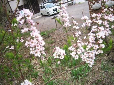 5- yukiyanagi.jpg