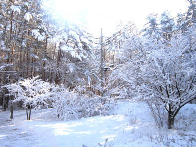 12-23 yukinohana.jpg