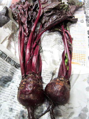 4557 10-15 beets.jpg